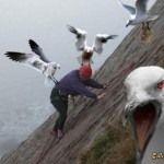 This Week In Comedy: With Attack Seagulls