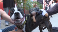 Triumph wraps up his World Cup coverage by humping the dogs of the World Cup