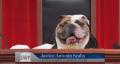 """Last Week Tonight"" creates an all-dog Supreme Court"